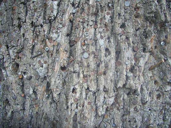 arbre à clous II