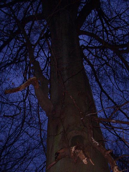 December 06 Blairwitch project (9) tree was talking