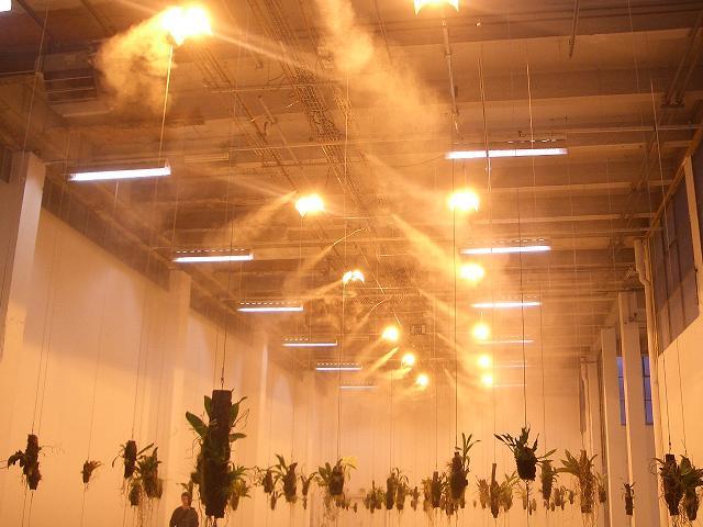 usine à fleurs Palais Tokyo June 06