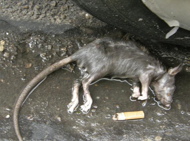 Fumer tue - tuméfié Oct 07