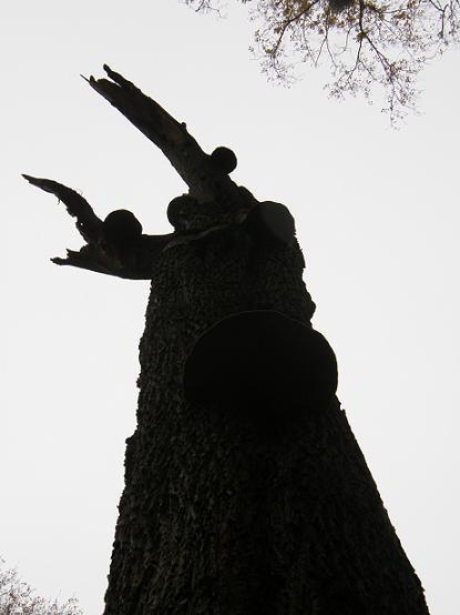 Le Spectre en bois - Nov 07