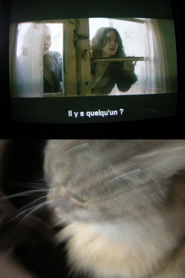 Y a quelqu'un ... le chat ne répondit pas.