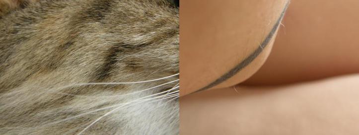 lignes animales - sept 09