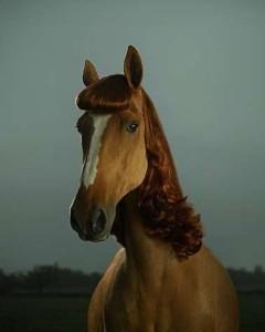 girly horse.jpg